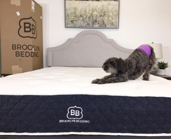 brooklyn signature mattress with dog