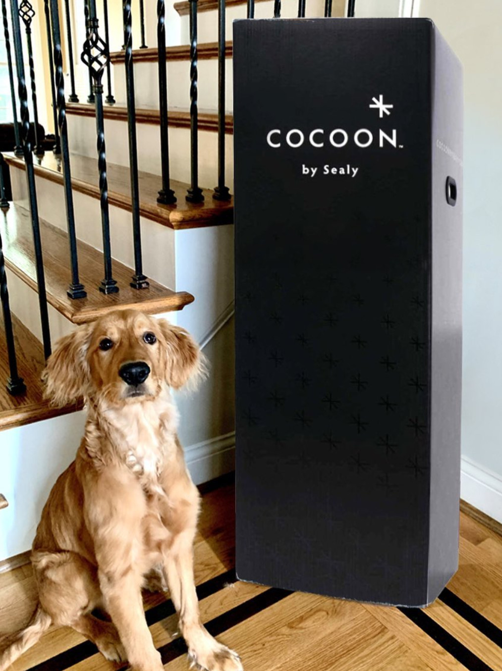 cocoon mattress box