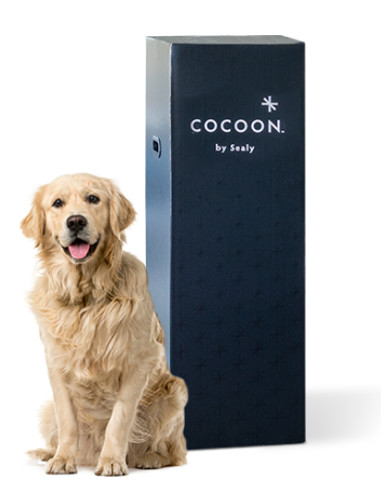 cocoon chill mattress review