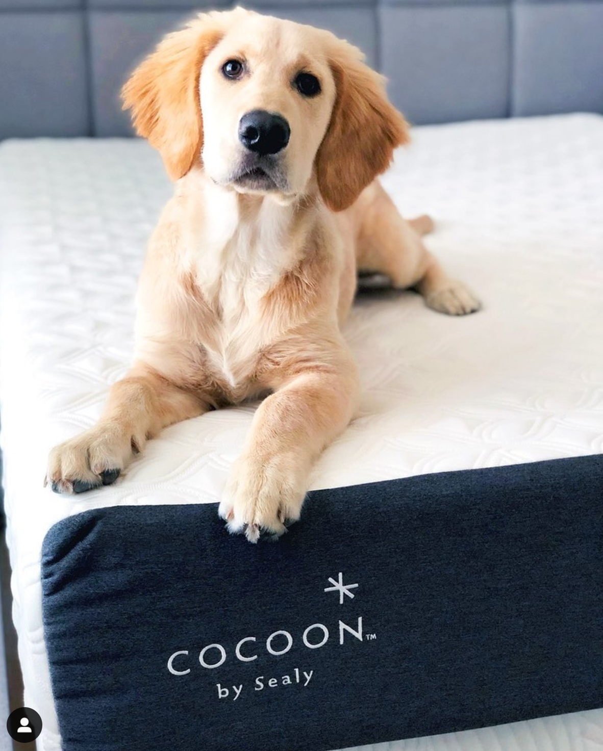 cocoon all foam bed