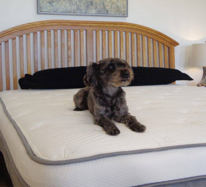 alexander signature mattress review
