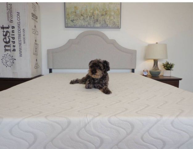 Dog on Love and Sleep mattress