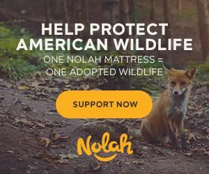 nolah original mattress review