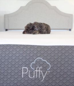 casper vs puffy mattress comparison