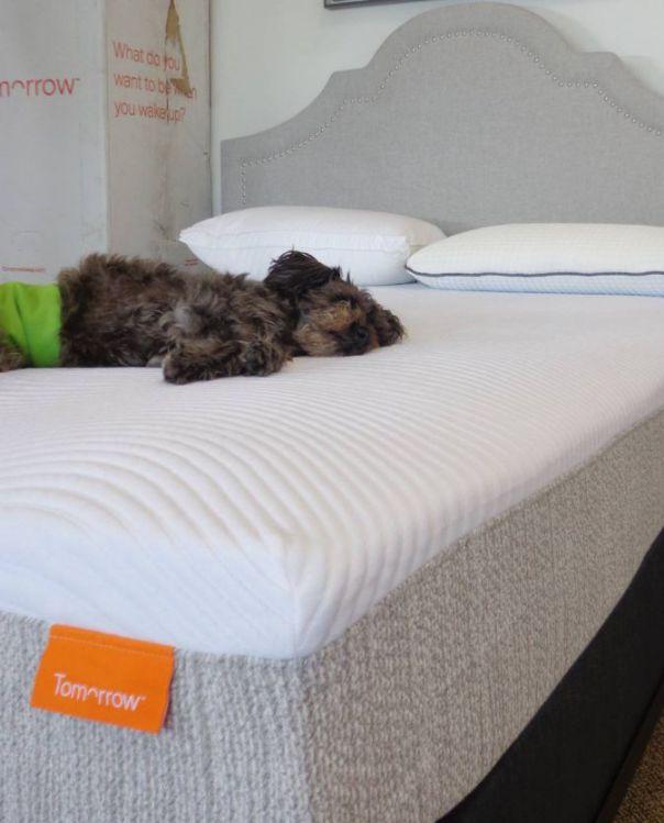 tomorrow mattress