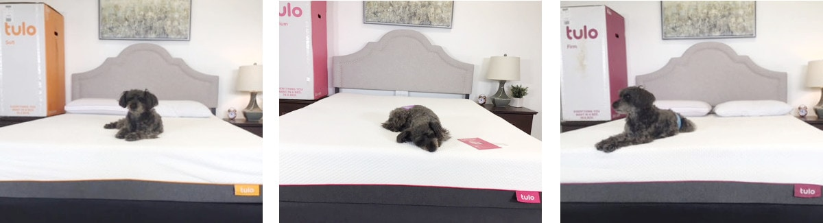 tulo mattress with dog laying on them