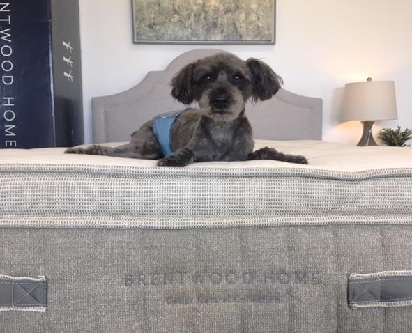 cedar mattress review