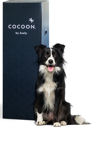 cocoon mattress box delivery