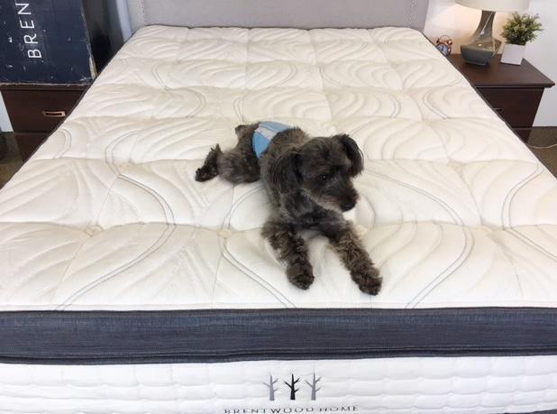 brentwood oceano mattress