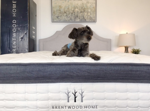 dog laying on brentwood mattress