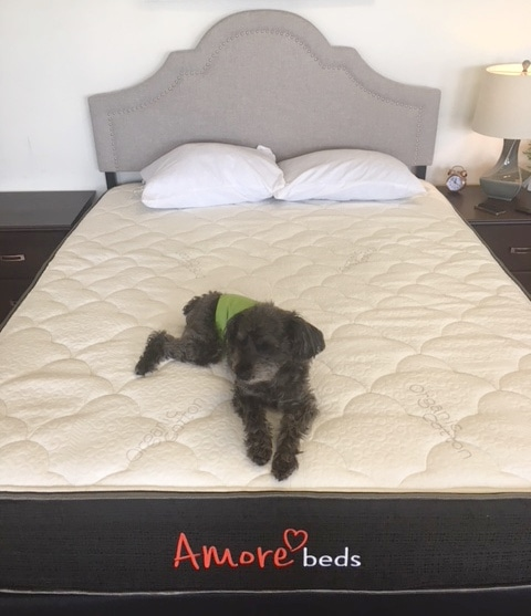 amore beds flippable foam mattress