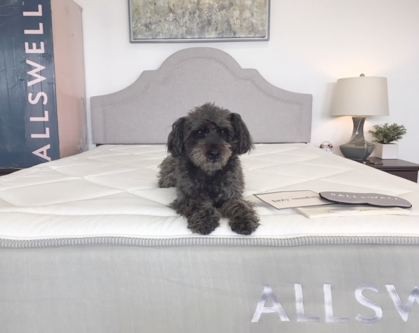 allswell memory foam mattress review