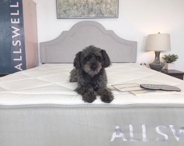 allswell memory foam mattress review