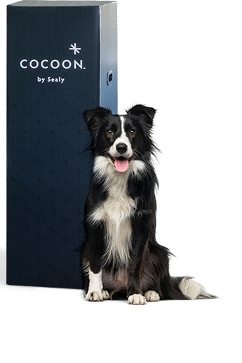 cocoon mattress box delivery and set up