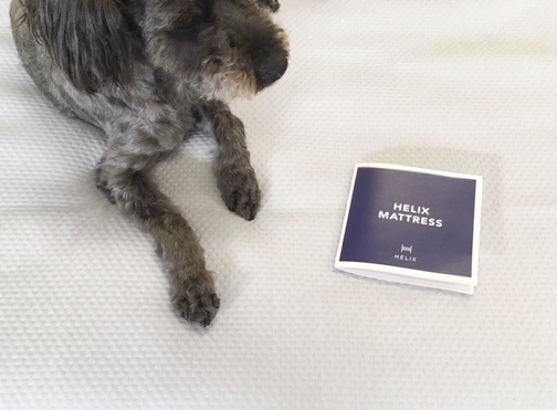 dog next to a helix mattress manual