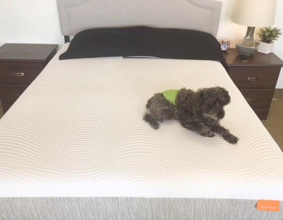 tomorrow sleep memory foam mattress