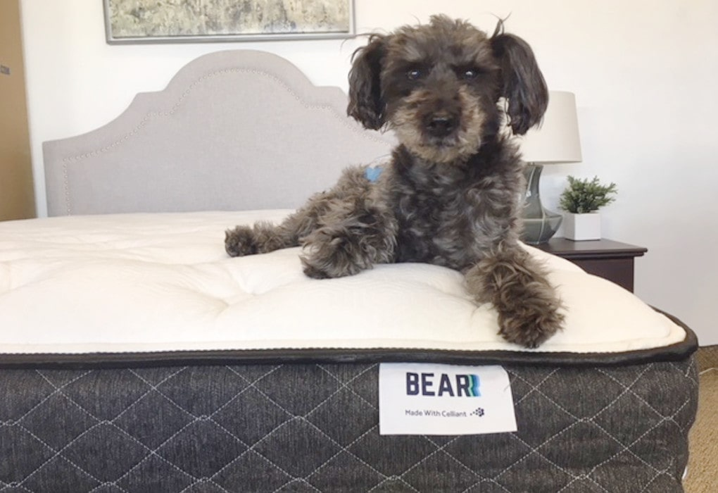 dog on bear mattress