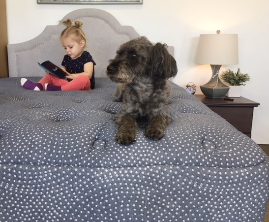 luft hybrid mattress vs helix luxe - dog and little girl on bed