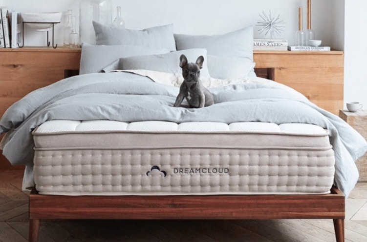dreamcloud bed with a dog