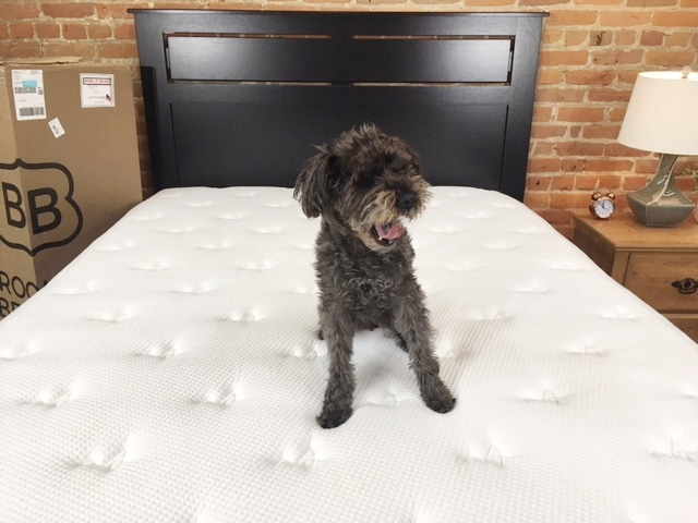 brooklyn bowery hybrid mattress review - dog on bed