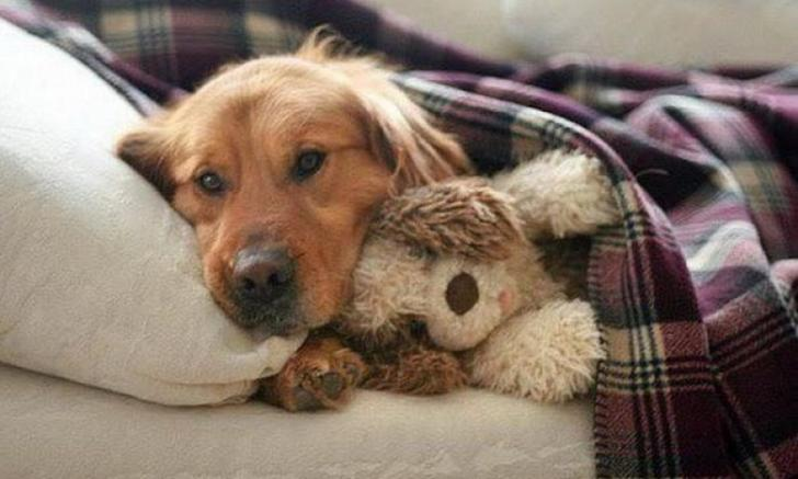 snuggle with your dog at night to stay warm