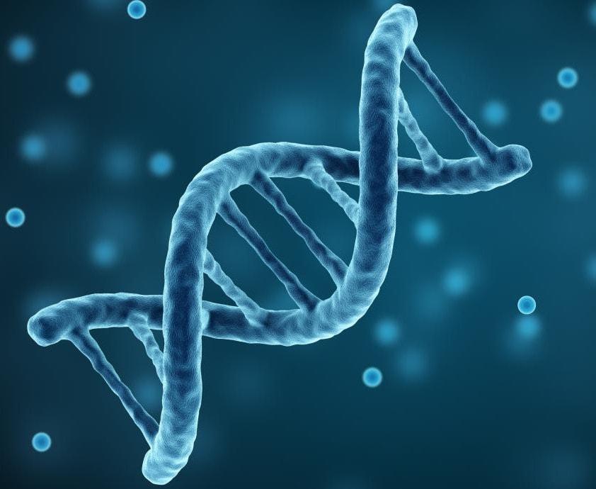 sleep cycle genetics