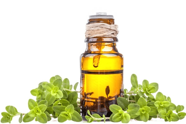 marjoram is best essential oils