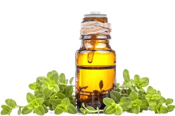 marjoram is best essential oils