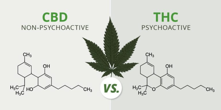 cbd oil and thc