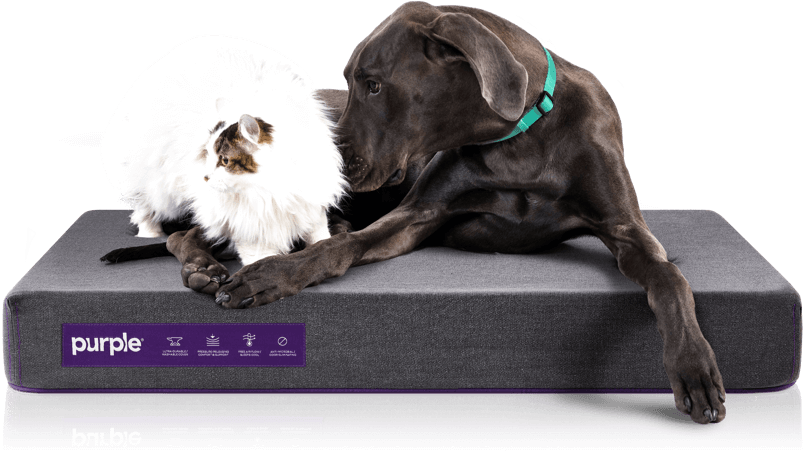 purple mattress dog bed