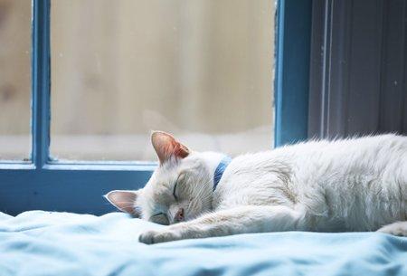 short naps or cat nap