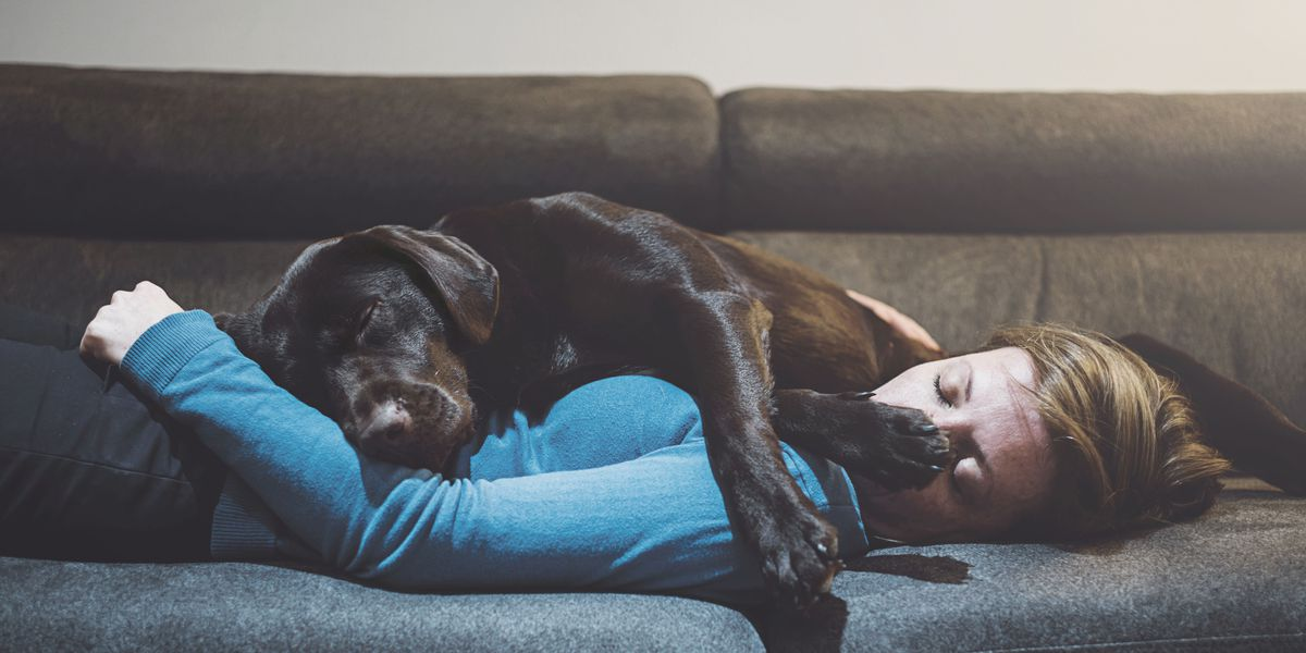 history of sleep dog