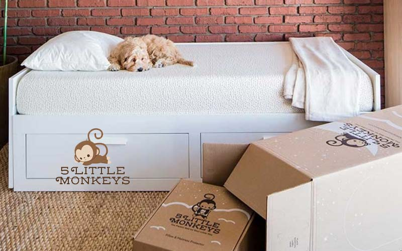 5 little monkeys mattress - dog on bed