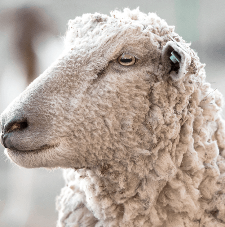 birch by helix wool pillow