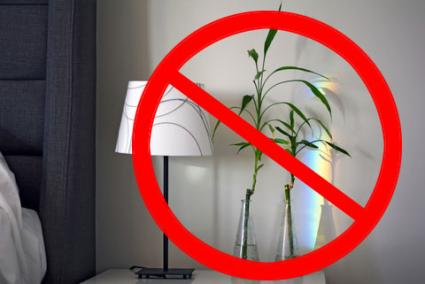 are plants feng shui better for sleeping