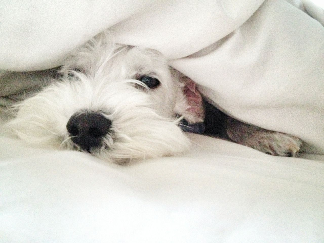dogs in the sheets should you sleep with your dog