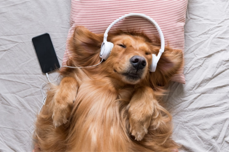 music that is good for dogs sleeping