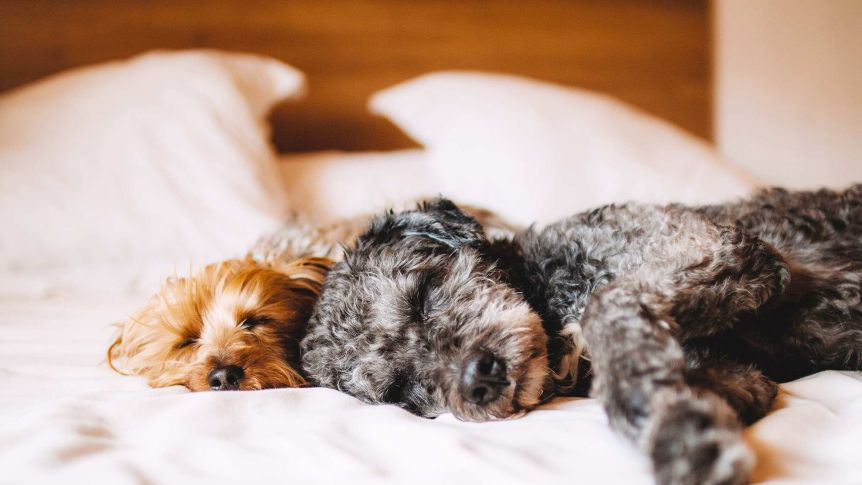 wash your sheets more often if you sleep with pets