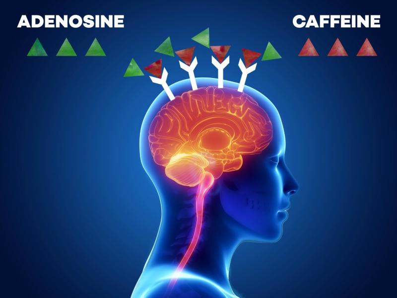 how caffeine prevents sleep