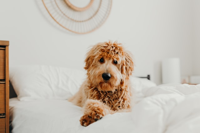 get a good bed for your dog