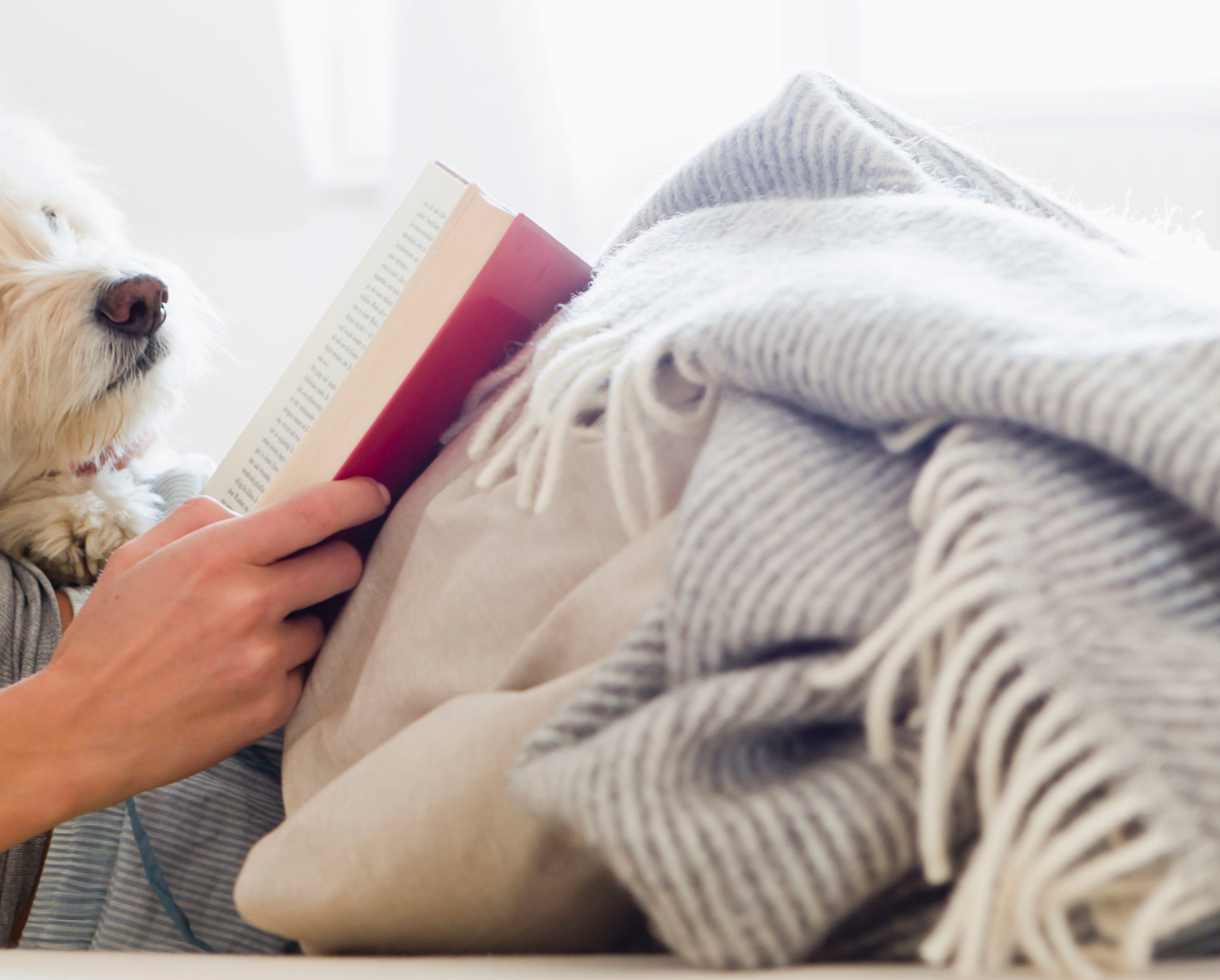 snuggle with a dog and a book to get through winter