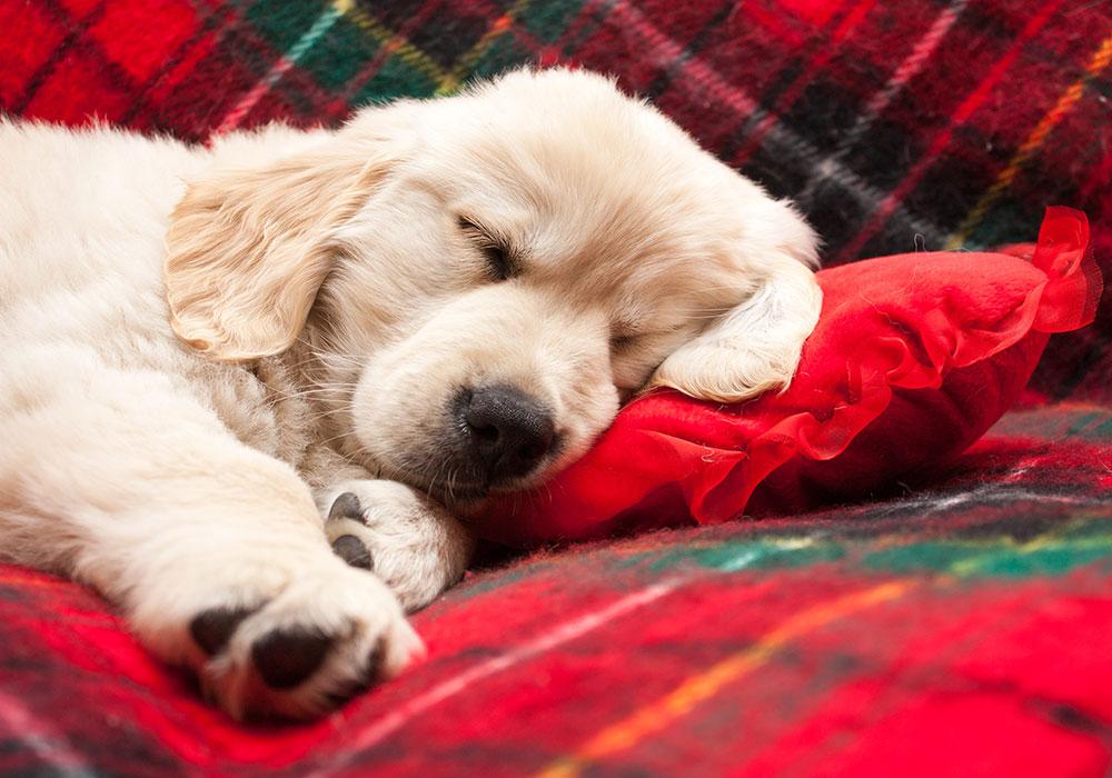 how to sleep better over Christmas break