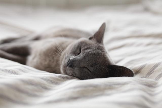 do all living things need sleep?