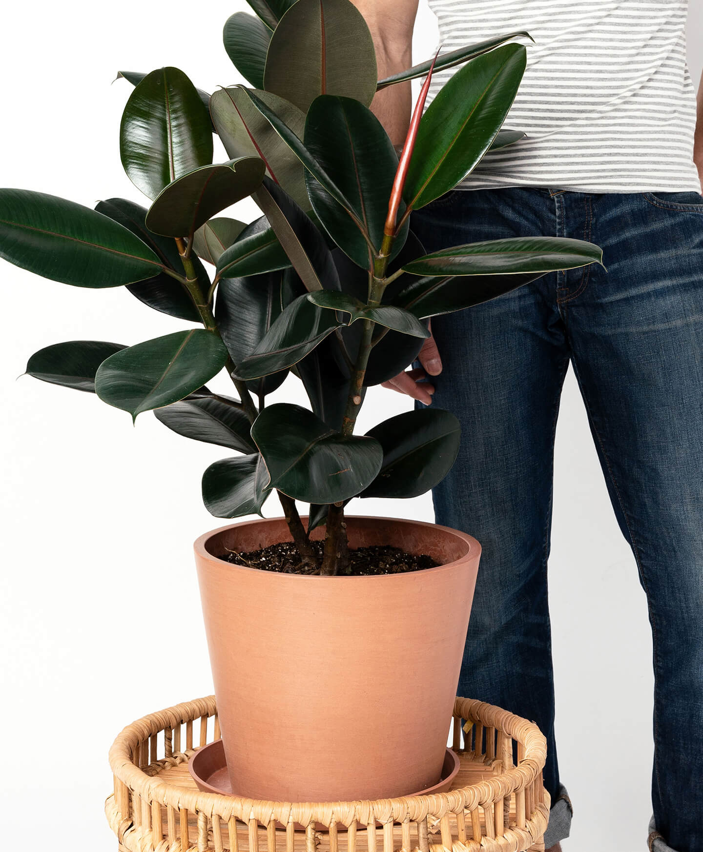 best indoor plants for fall