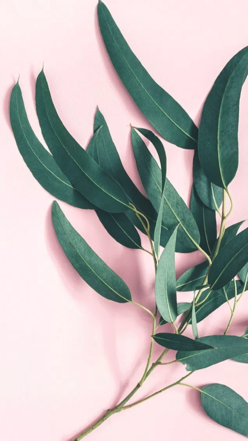 review over eucalyptus fabric sheets