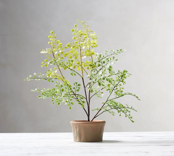 plants for inducing sleep