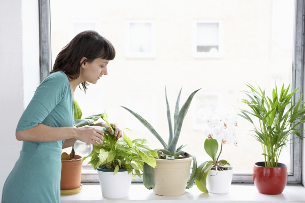 best house plants for bedrooms