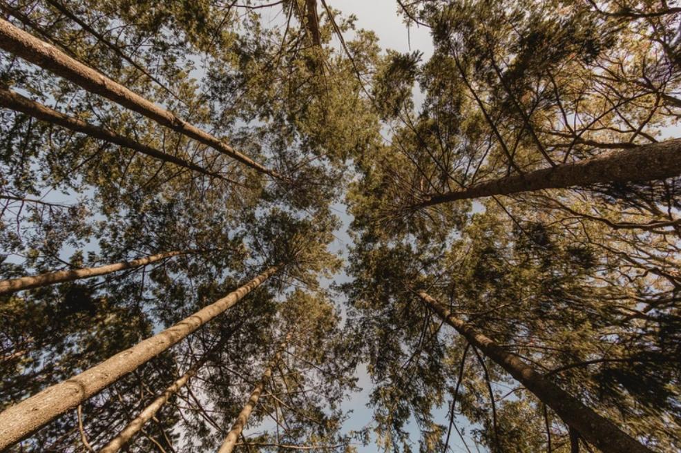 natural fibers eco ethical friendly pajamas review
