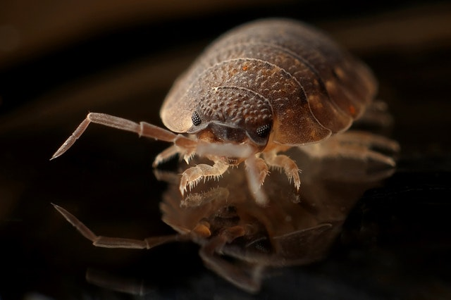 dirty room can increase bed bugs