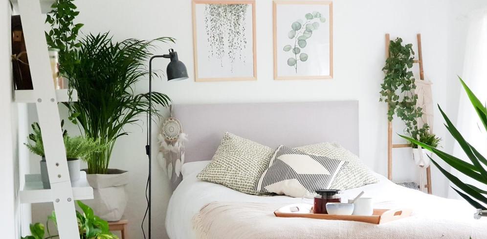 optimal plant bedroom